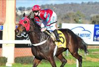 Wodonga trainer Craig Widdison happy with Baby Don't Cry ahead of the Wagga Whiz