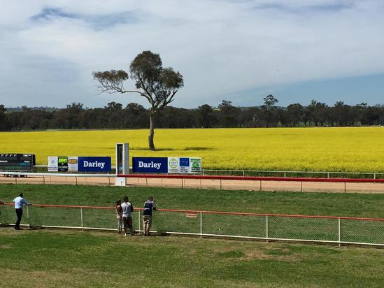 Stable Runners For Craig Widdison At Cootamundra On Sunday