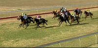 Baby Jack Puts In A Solid Effort To Place At Narrandera