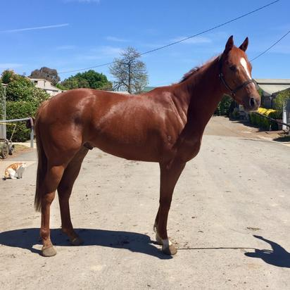 Only Limited Lease Shares Remain In This Looker By Ilovethiscity, A Half To El Dorado Dreaming