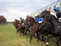 Berrigan Races Today