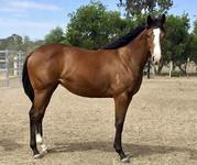 Limited Opportunities Exist For This Flashy Type Filly By Time For War
