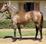Race A Press Statement Filly With Us Out Of A Multiple Winning Mare Of Seven Races
