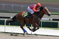 Race A Reward For Effort Colt With Our Team, His Brother A Winner Of 2 In Singapore