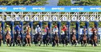 We Supply Runners To The Sportsbet Ballarat Synthetic On Tuesday