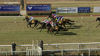 Baby Jack Appears Late On The Scene To Arrive In Third At Wagga