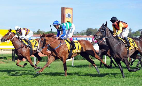 An Opportunity To Buy An 8 Time Winner In CHINZIA In Foal To Group 1 Winner DUPORTH.