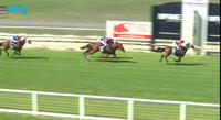 Shadow Of Pylon Picks Up A Runners Up Cheque At Wodonga