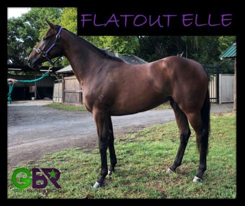Flatout Elle