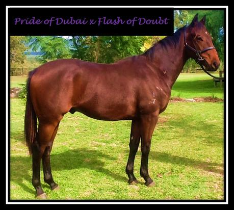 Pride Of Dubai X Flash Of Doubt