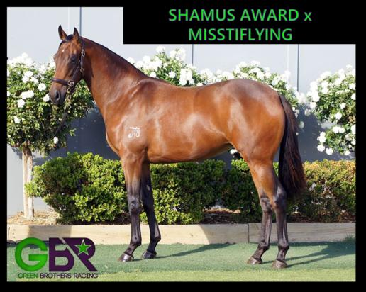 SHAMUS AWARD X MISSTIFLYING