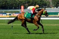Allervite Trounces His Rivals