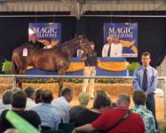 Portelli Racing Update: Sales Season Kicks Off With Promising Start for Buyers