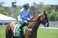 Sebring Sun the shining light at lacklustre Rosehill barrier trials