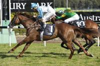 Sebring Sun Ready For Randwick Return