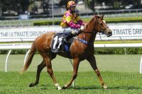 Zafina In Millions Bid At Gosford