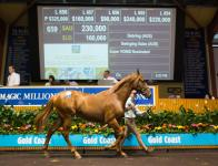 Exciting Sebring Filly For Portelli Racing