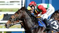 Dane Ready For Australia Stakes