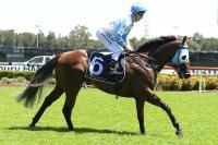 Weather key to Warwick Farm: Portelli