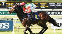 Rebel Dane still up for fight, says trainer Gary Portelli