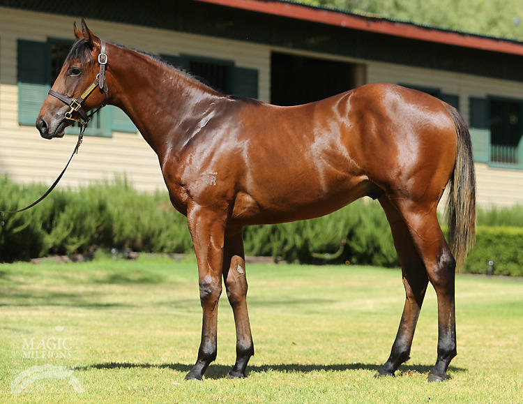 Trainer hoping his colt can reign too on Saturday