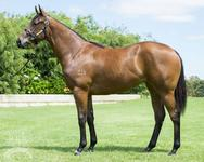 Portelli Racing Partners with Blue Sky and Aquis on Choisir Filly