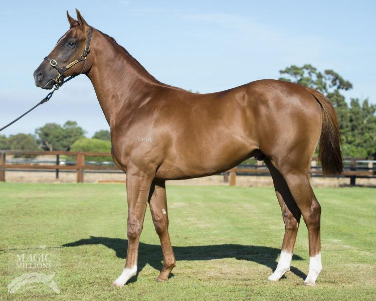 Patronize Colt Secured In Perth
