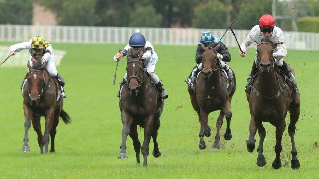 Gary Portelli still confident about the Slipper despite She Will Reign's defeat