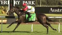 Lipizzan Wins For Laurel Oak