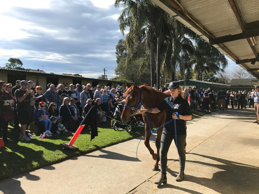 Portelli Stable Open Day