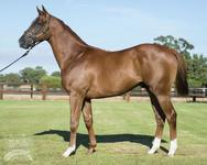 Watch Out.. Another Portelli 2yo coming through