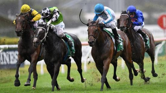 Villiers Stakes hope Testashadow keeps getting under Gary Portelli's guard