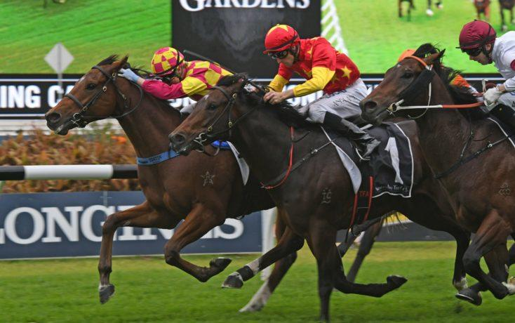 Acid Test For Portelli's Unbeaten Star