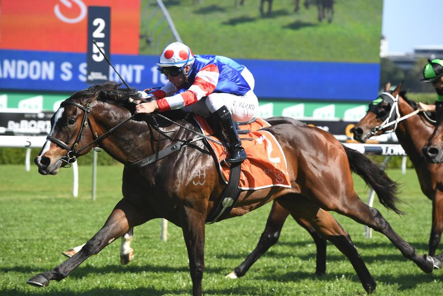 Single Bullet ready to fire at Rosehill
