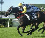 Thump Capable Of Group 1 Upset