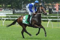 Last 100m Felines' Test At Randwick