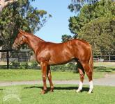 Promising Colt Ready For Black Type Test