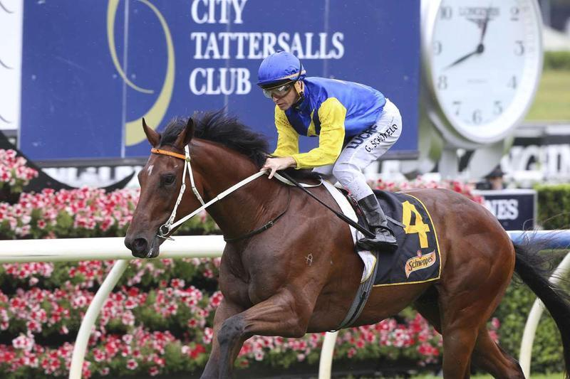 Tongue Tie For Le Romain In Makybe Diva