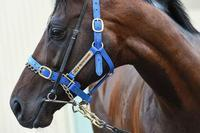 Winkers For Protectionist At Caulfield
