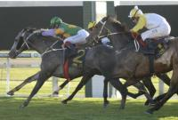 Stablemates Ready For Wyong Provincial Qualifier