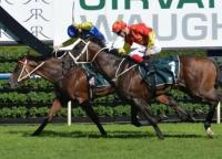 Rosehill Guineas Possibility For Le Romain