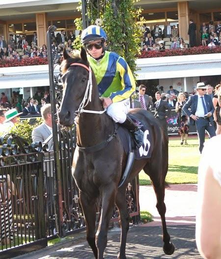 McEvoy Booked For Lucia Valentina In Cox Plate