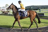 Zestful The Pick Of Derby Day Trio