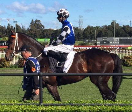 Kris To Rely On Singing For Wyong Cup