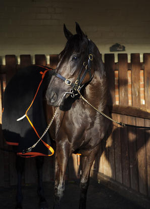 Lucia Valentina Retired To Stud