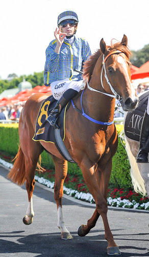 Talented Colt Ready For Big First-Up Performance