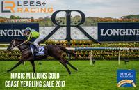Magic Millions Sale is just around the corner