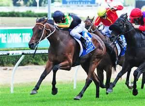 Stablemates Ready To Race Well At Gold Coast