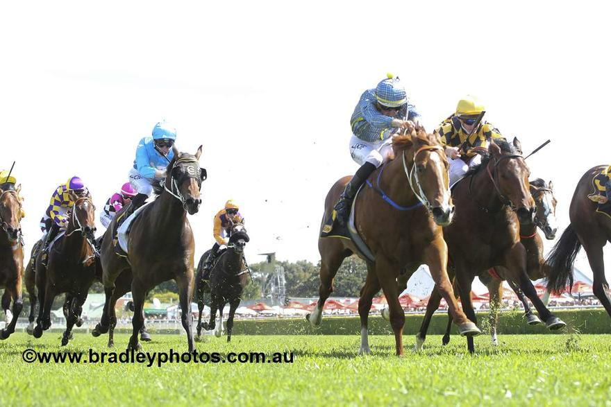 Muswellbrook Focus Instead For Rosehill Pair