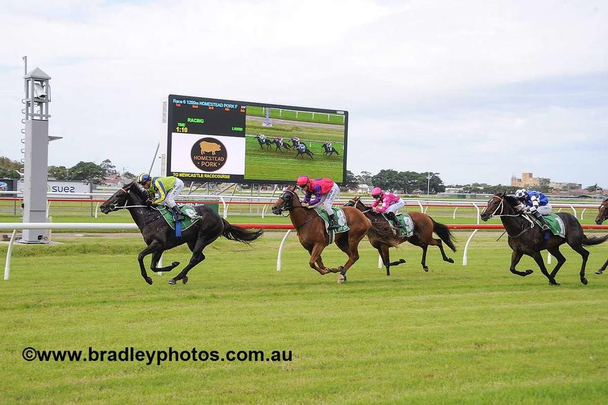 Rosa Carolina Knockout Chance In Guineas
